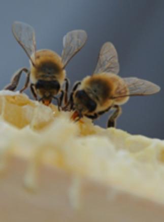 Ateliers sur les pollinisateurs suivi d'une pose de nichoirs à pollinisateurs