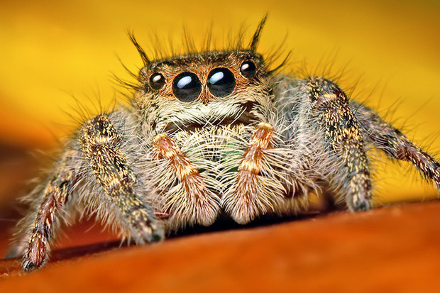 Astucieuses araignées, à l'Insectarium de Montréal. Crédit-image à l'Espace pour la vie.