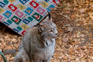Noël des animaux