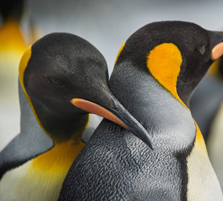 Exposition Homo Antarctica de Lorraine Turci