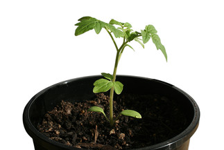 Bien démarrer ses semis à la maison