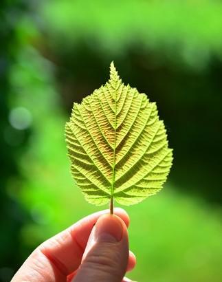 Les feuilles au fil des saisons