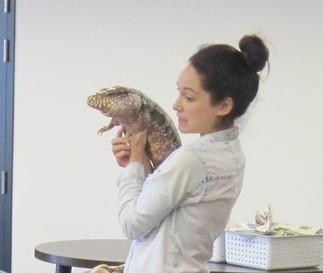 Les reptiles avec Magazoo