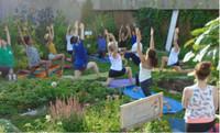 Yoga au jardin