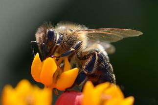 Les insectes en hiver