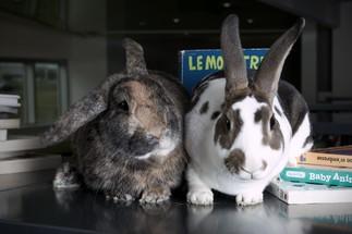 Histoires de crottes ou quand les lapins font du recyclage!
