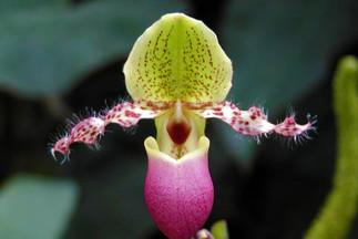 Exposition de la collection d'orchidées