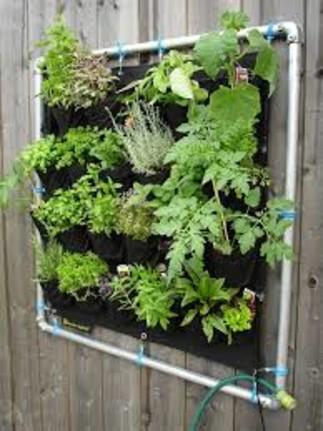 Aménagements comestibles sur balcon et autres petits espaces urbains