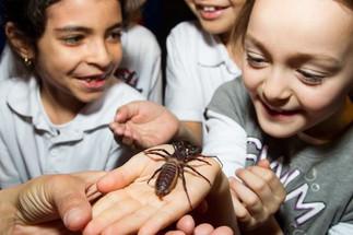 Les super insectes en tournée - Été