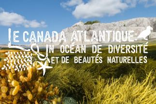 Exposition «Le Canada atlantique : un océan de diversité et de beautés naturelles» de Nick Hawkins