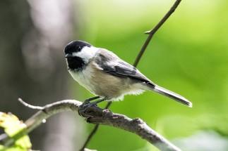 Les samedis nature : Les oiseaux