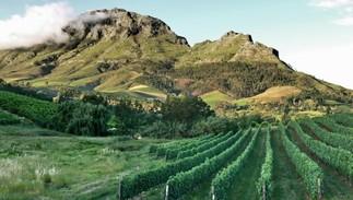 Atelier de dégustation – Cap sur les vignobles sud-africains