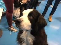 Visite du chien Duff!
