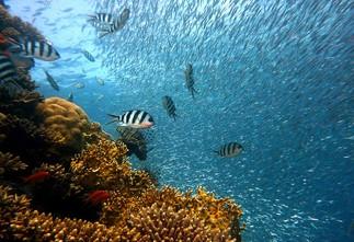 Plongée sous les mers (5-12 ans)