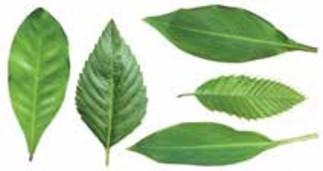 Herbier de plantes magiques