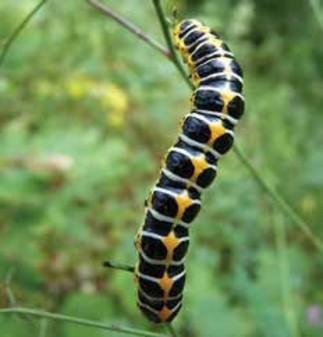 Les insectes en action avec Guepe