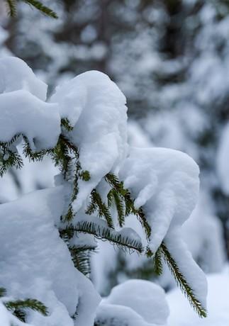 Les plaisirs de l'hiver au Québec
