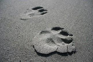 Empreintes d'animaux en argile [En ligne]