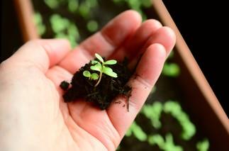 Jardinage écologique 1 : les semis à l'intérieur