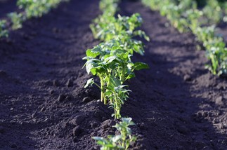 Jardinage écologique4: l'entretien du potager