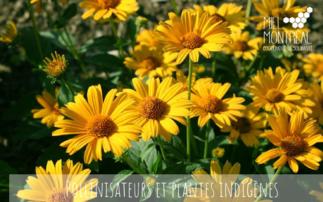 Pollinisateurs et plantes : une histoire d'amour!
