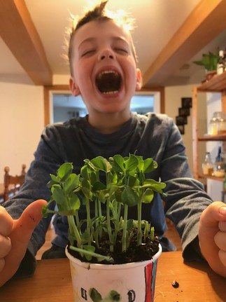 Jardinez dans la cuisine!