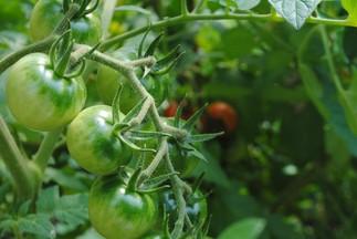 Introduction à l'agriculture urbaine