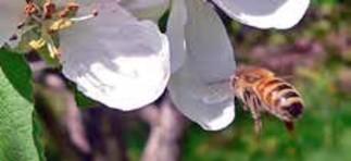 Jardiner pour les abeilles