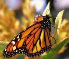 Révérence : le Projet monarque