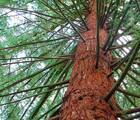 Mai, mois de l'arbre et des forêts