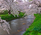 In the Heart of Japan