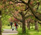 La course aux arbres