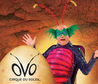 New exhibition in collaboration with OVO by Cirque du Soleil