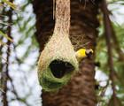 L'oiseau fait son nid