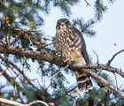 Introduction to birdwatching walks