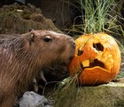 Halloween for the Animals