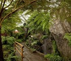 Guided Tours of the Exhibition Greenhouses