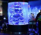 Le monde sous-marin des fonds rocheux