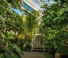 Explore the greenhouses