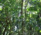 A Treetop Trip