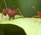 La citadelle des fourmis