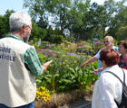 Guided tours of the Outdoor Gardens