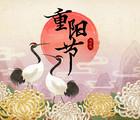 Celebrate the Chinese Way: Chrysanthemum Festival