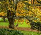En tête-à-tête avec un.e expert.e - Si les arbres pouvaient parler