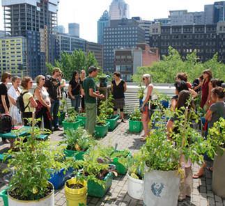 9e École d'été sur l'agriculture urbaine de Montréal : Agriculture urbaine, outil de réappropriation de la ville et du système alimentaire