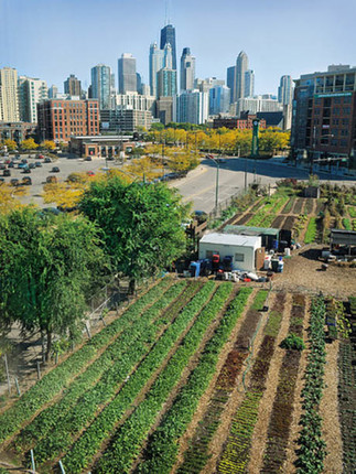 Urbanité, crise et résilience : rôle de l'agriculture urbaine dans la ville du 21ième siècle