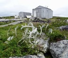 Kuugaaluk: along the traces of our forefathers