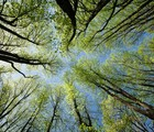 En compagnie des arbres